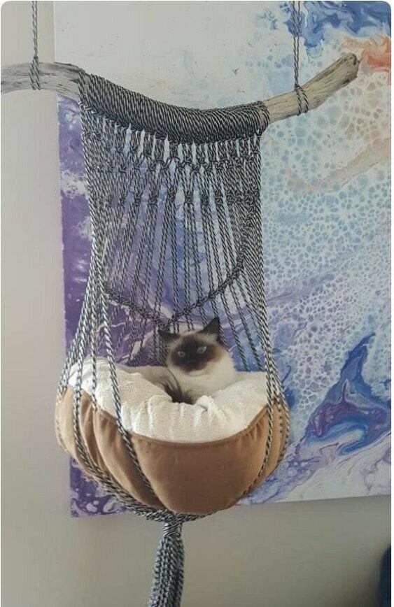 Умеете плести всякие макраме - ваш кот будет доволен