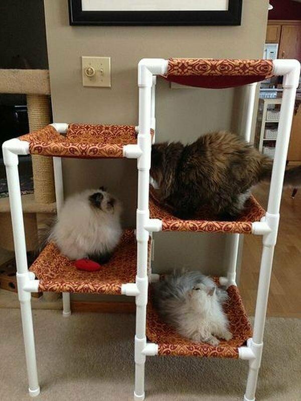 Котики с песиками вам скажут спасибо!