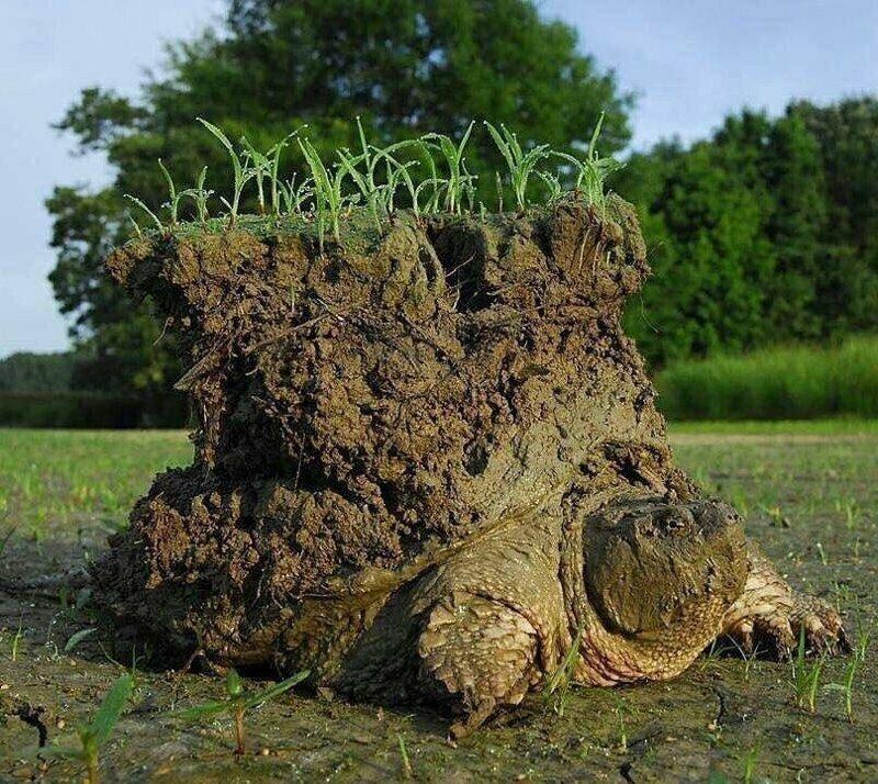 Черепаха, проснувшаяся после зимней спячки
