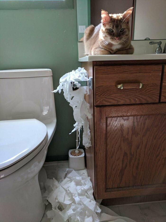 """""""Запер кота в ванной, пока ел. Его месть не заставила себя ждать"""""""