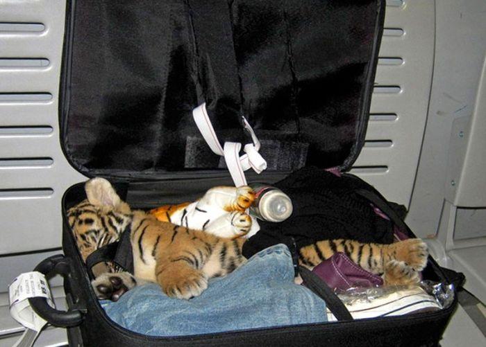 Так выглядит контрабанда диких животных