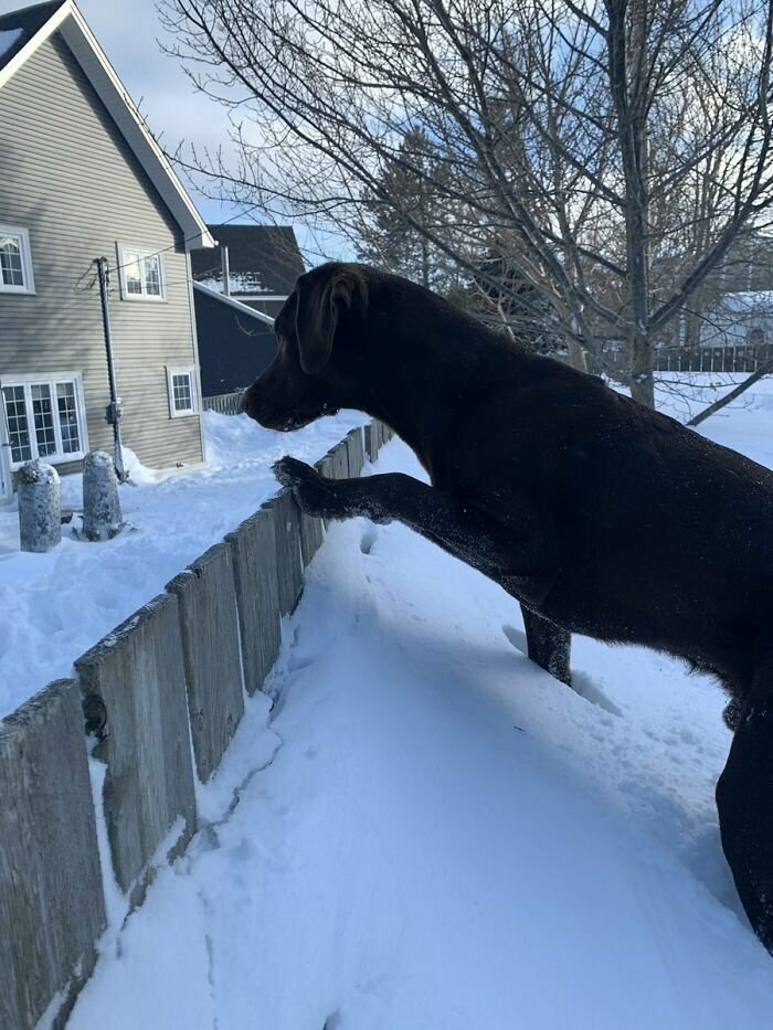 """""""Перелезть через забор или нет?"""""""