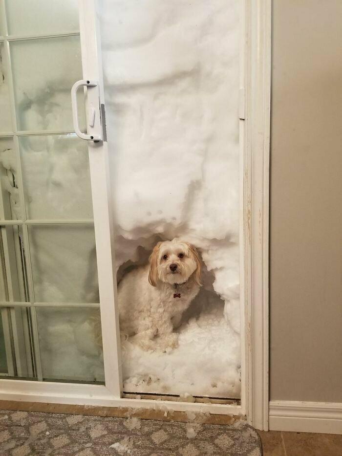 """"""" У Скуби теперь есть современный """"снежный туалет для собак"""""""