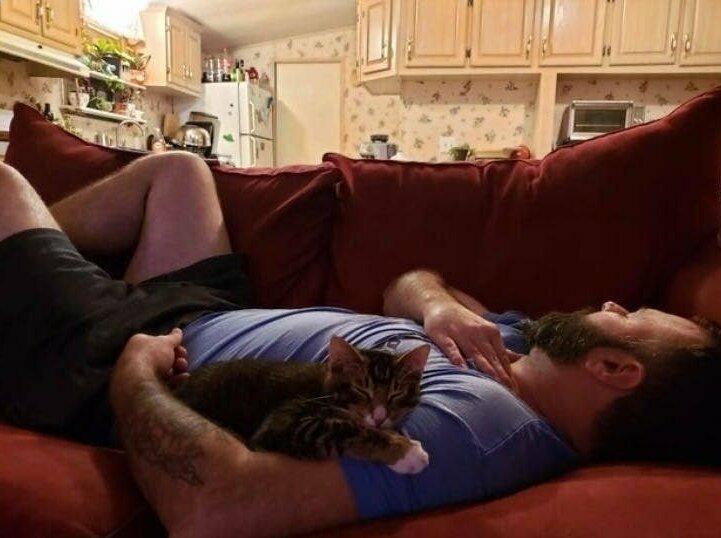 """""""Мой муж """"не любит кошек"""" и долго не разрешал мне завести котенка. Теперь он каждое утро кормит котенка сливочным сыром и спит с ним обнявшись... Но продолжает утверждать, что не любит маленького засранца"""""""