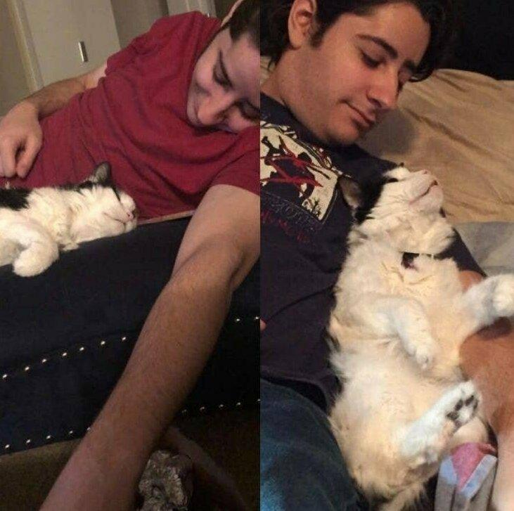 """""""Мой муж: """"Я просто действительно не люблю кошек"""". Мой муж 2 месяца спустя: """"Я умру за эту кошку"""""""