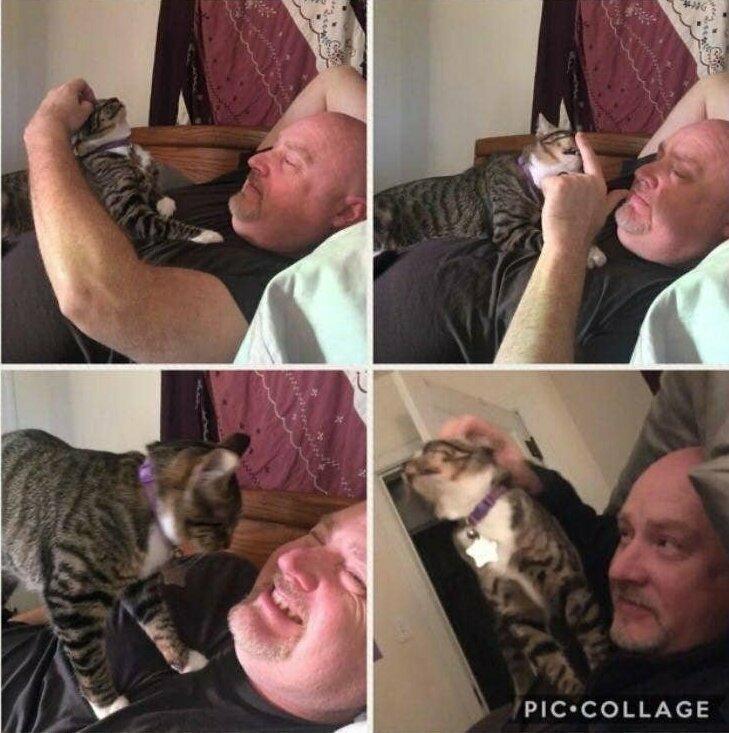 """""""Мой муж, который """"просто терпеть не может кошек"""", каждый вечер позволяет Катрине сидеть у него на груди и расчесывать его бороду"""""""