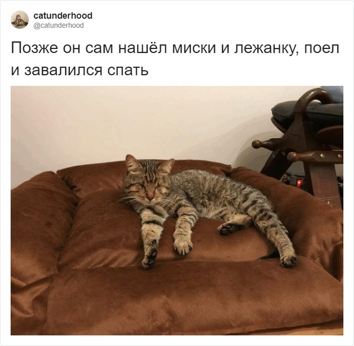 Котик незрячий, но любимый
