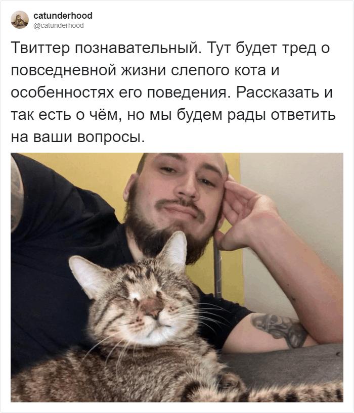 Каково жить со слепым котом?