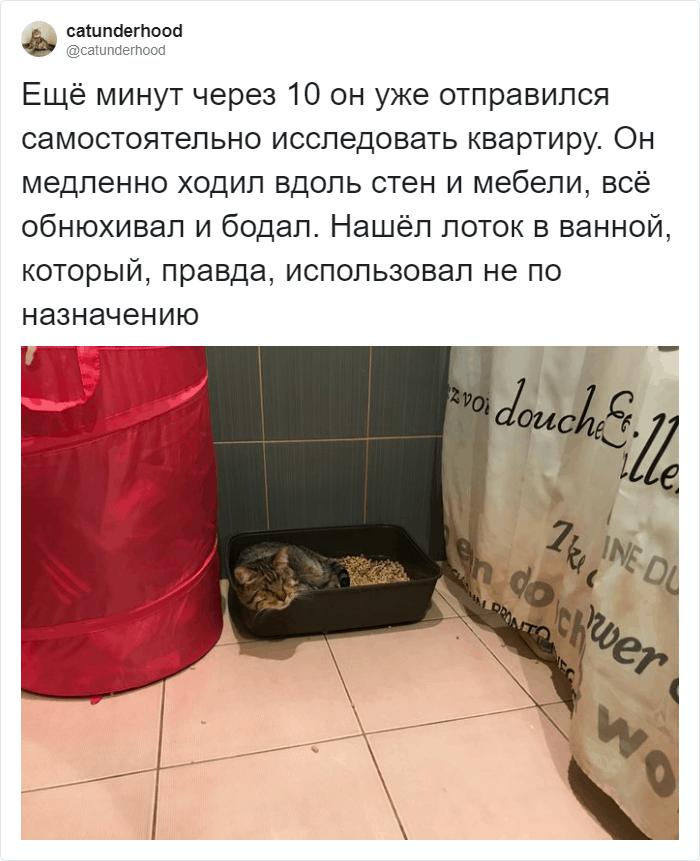 Чуть позже кот осмелился на самостоятельное исследование помещения