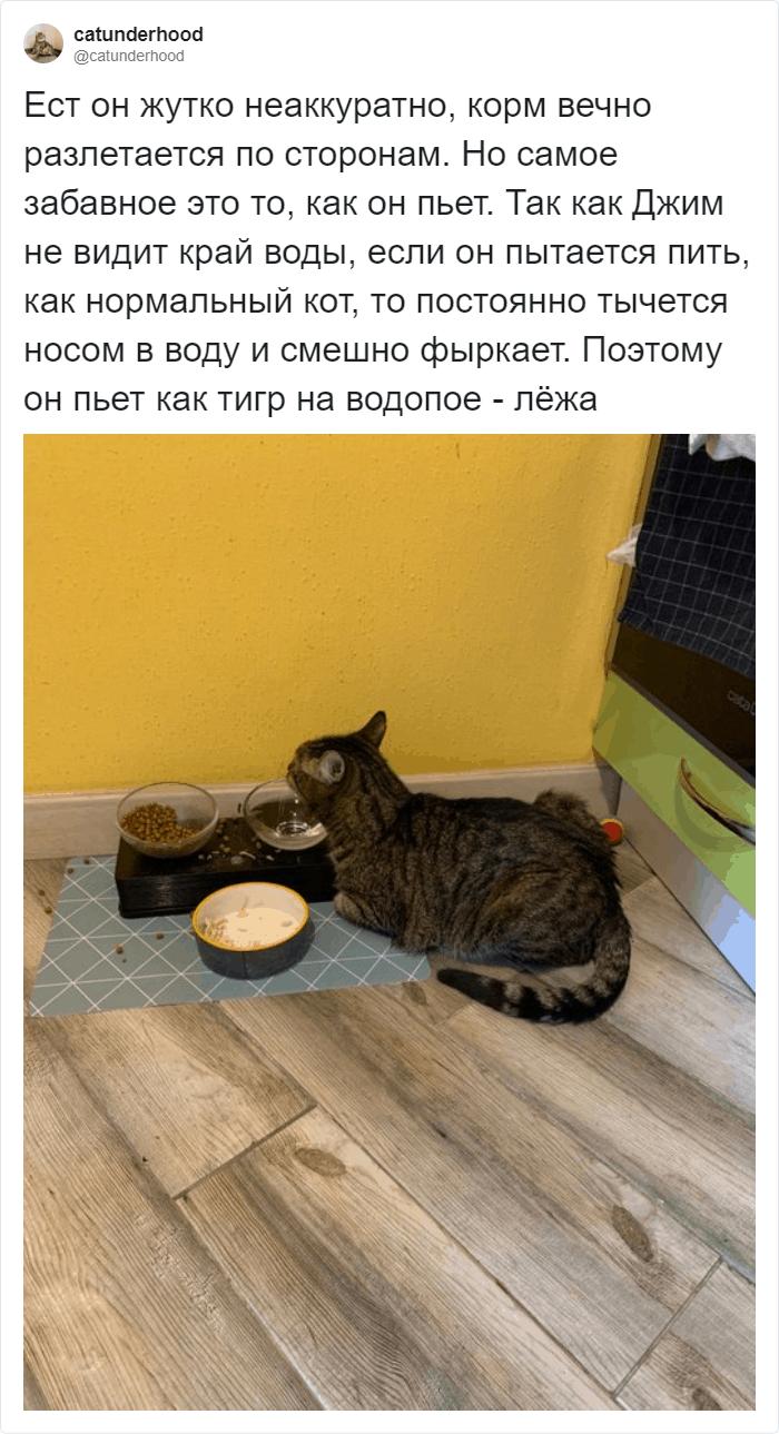 Еду кот находит быстро по запаху