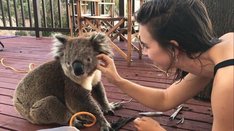 Поцелуй коалы: в благодарность