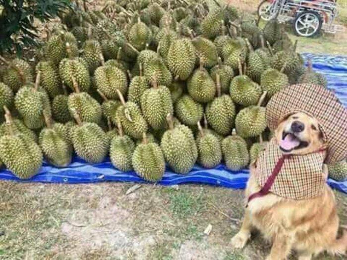 Продавец дуриана