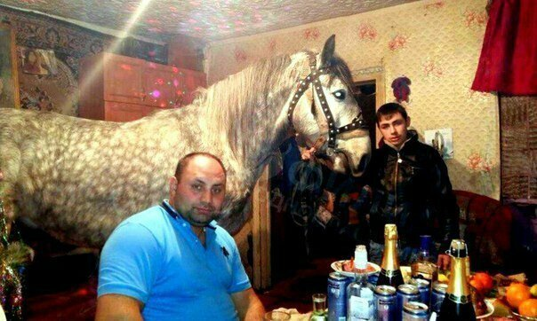 Судя по взгляду, удивлен этой ситуацией только конь