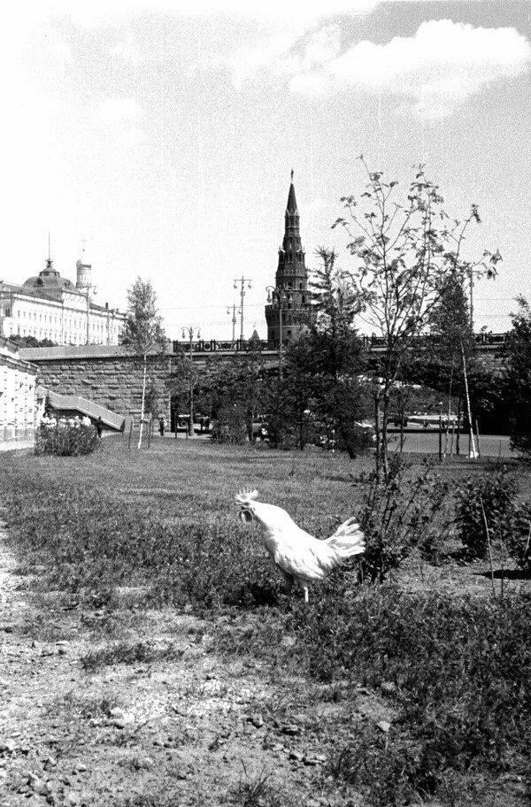 Утро в Москве. 1960-е годы