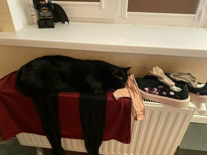 Нет, этот кот сегодня не попадал под каток