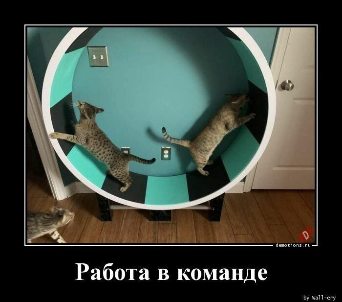 А вы любите картинки-демотиваторы?