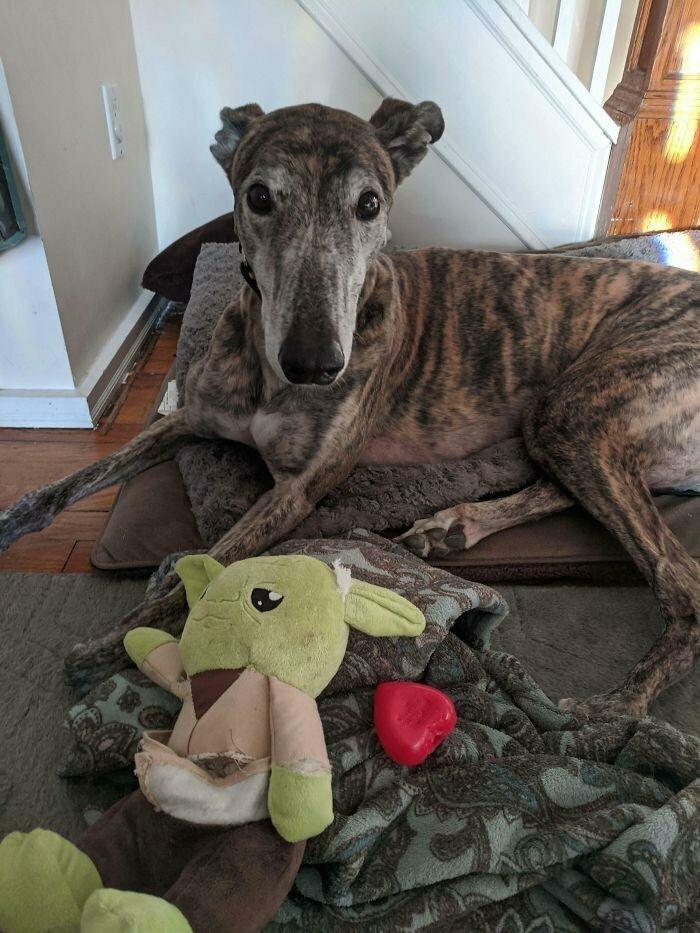 """""""Мой пес разорвал свою плюшевую игрушку в виде Йоды, внутри которой оказалось сердце"""""""