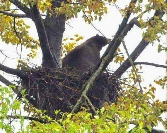 Ничего необычного, просто гнездо медведя