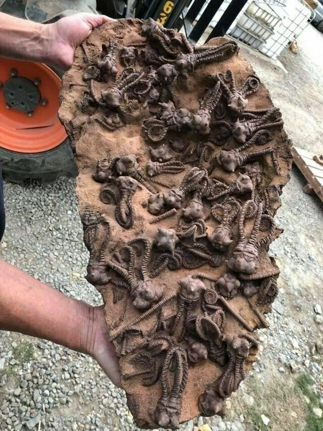 На фото - морские окаменелости древних моллюсков