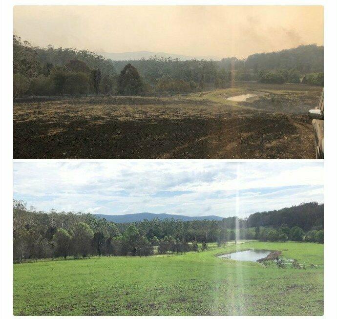 Поле после пожара - и 10 недель спустя:  природа сама себя лечит