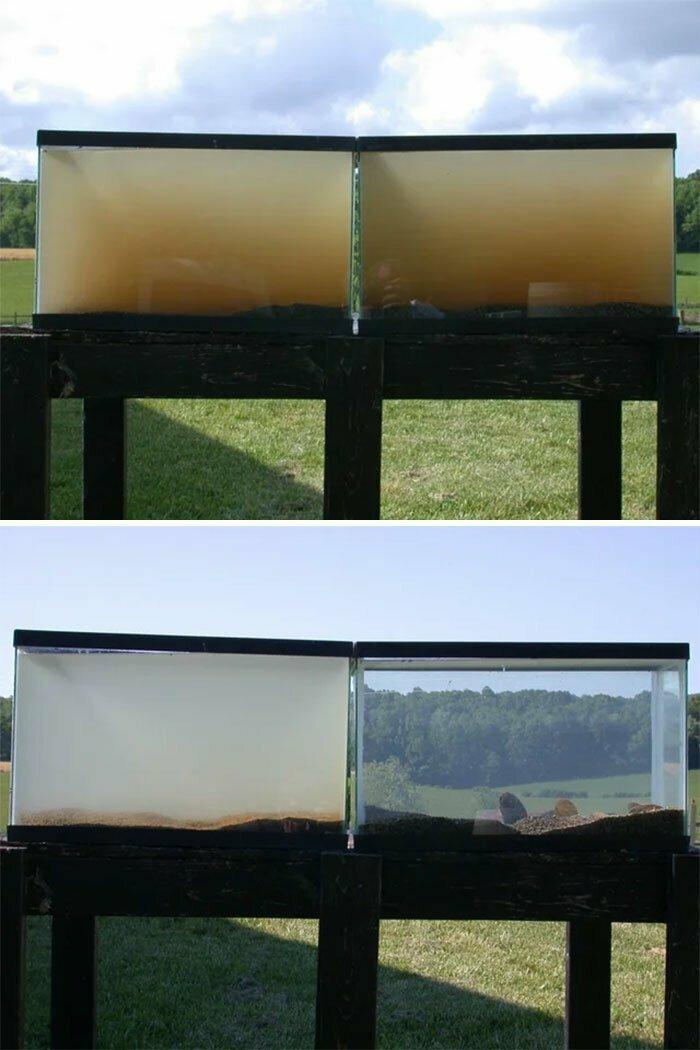 В два аквариума налили речную воду. В правый посадили мидий, в левый - нет. Вот как они выглядели спустя 24 часа