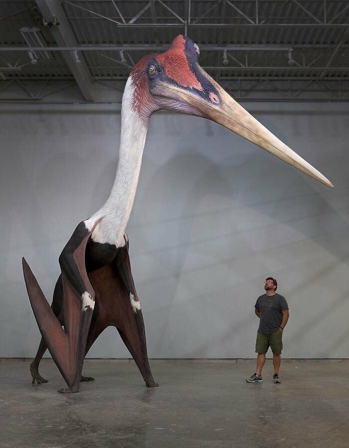Кетцалькоатль, самое большое летающее животное в истории, рядом с человеком