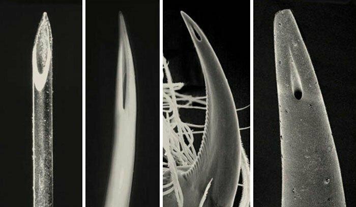 Совершеные творения! Слева - тонкая игла для инъекций. Рядом - клык гадюки, клык паука и жало скорпиона
