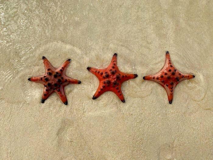 Морские звезды с 4, 5 и 6 лучами
