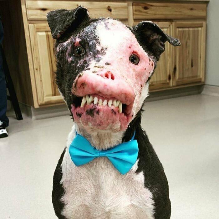 Из-за болезни этот пес страдал, но ему улыбнулась удача