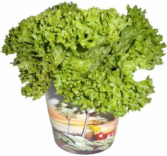 Маринованные листья салата