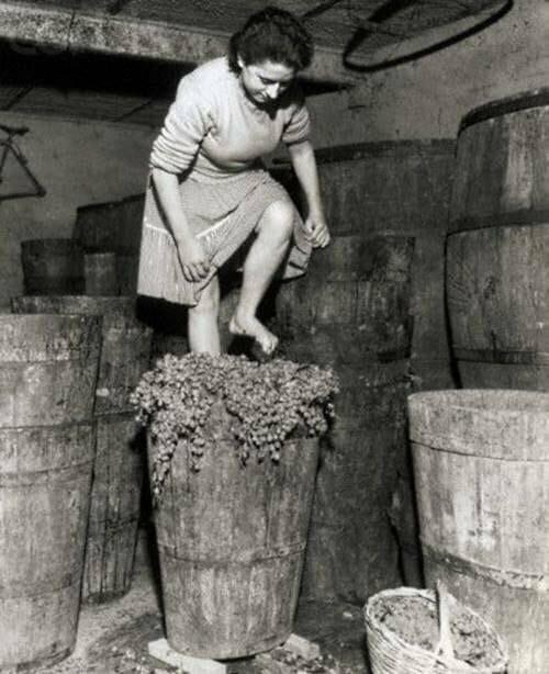 Изготовление вина в Италия, 1957 год