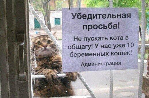Кот-мачо