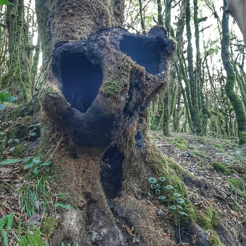 Чего только люди не находят в лесу