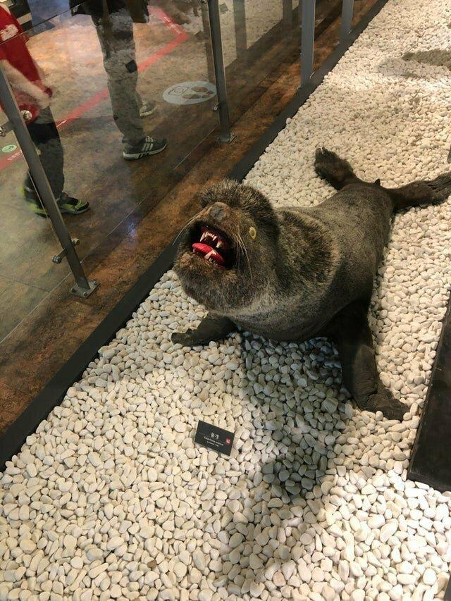 Вы слышали крик тюленя?