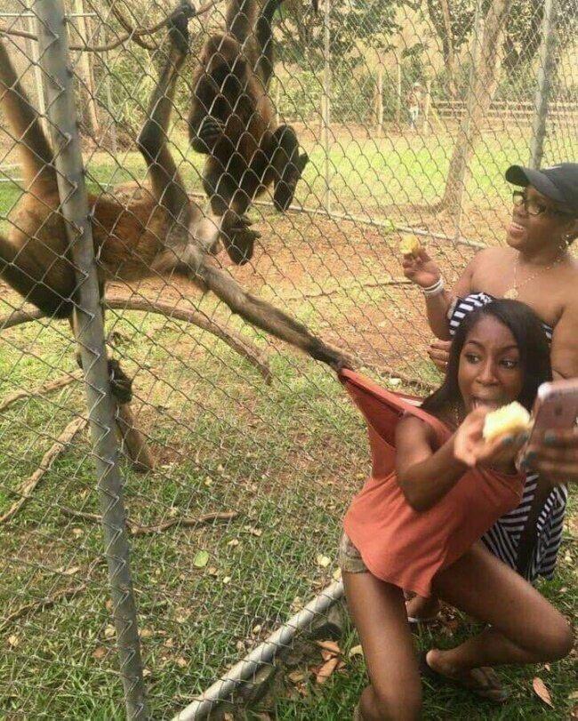 Девушки vs поход в зоопарк
