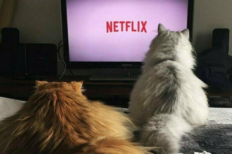 Российские онлайн-кинотеатры открыли бесплатный доступ к просмотру фильмов и сериалов