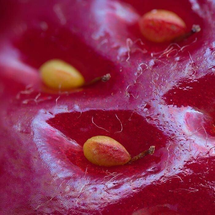 Поверхность ягоды клубники при большом увеличении