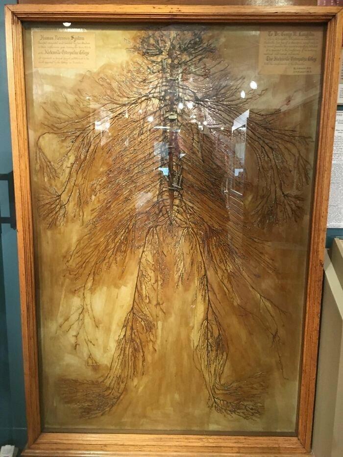 Так выглядит нервная система человека