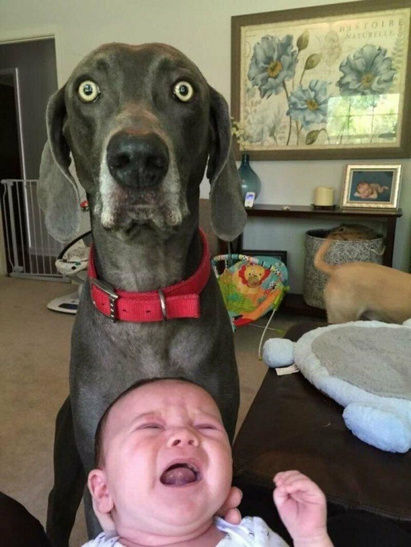 Хозяин, у тебя ребёнок сломался