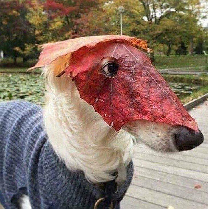 На прогулке хозяин соорудил мне маску
