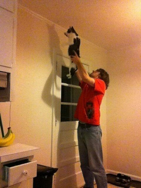 Кот и сам с пауком отлично справится