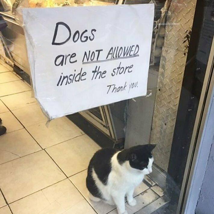 Бдительная охрана следит, чтобы в магазин не входили с собаками