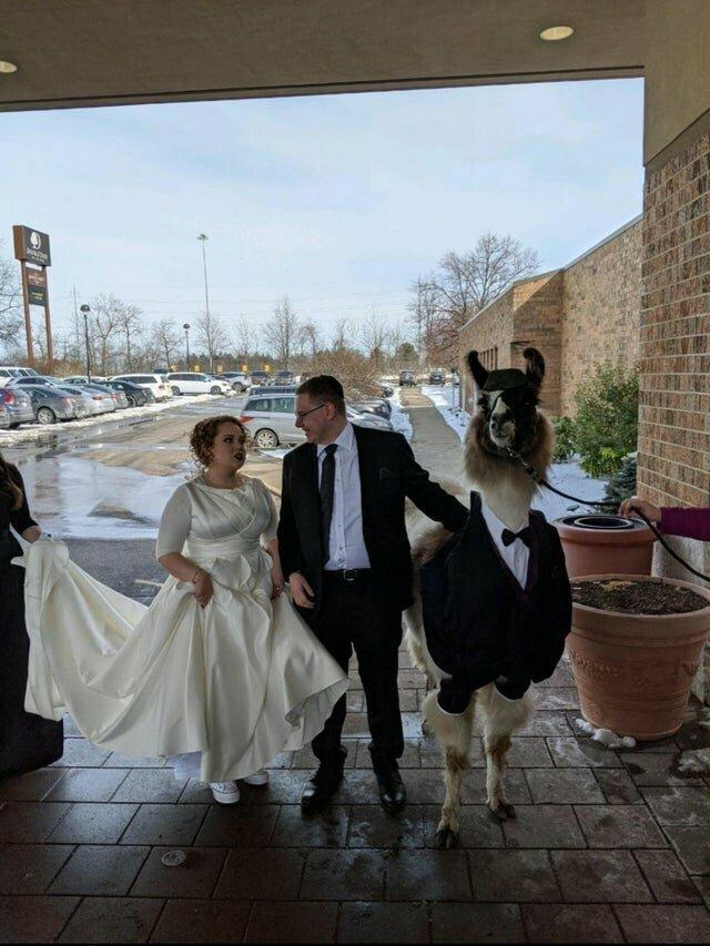 Кому и лама жених