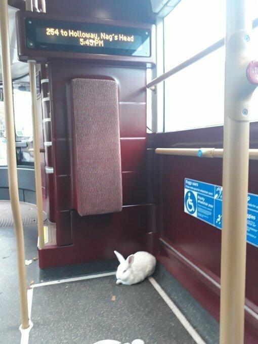 Кажется кто-то здесь едет зайцем