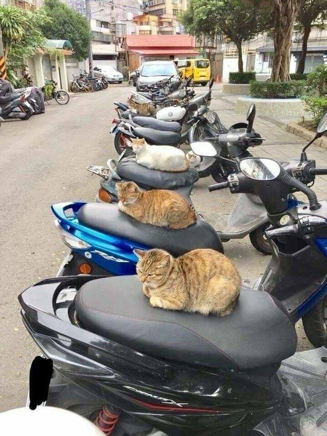 Котоохрана в действии