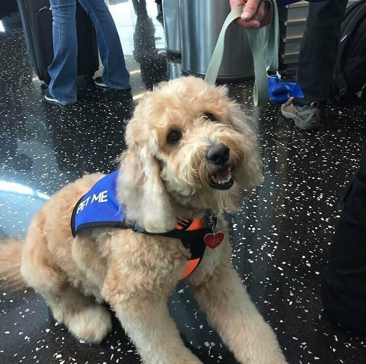 Работник аэропорта Сан-Диего помогает пассажирам справиться  с волнением