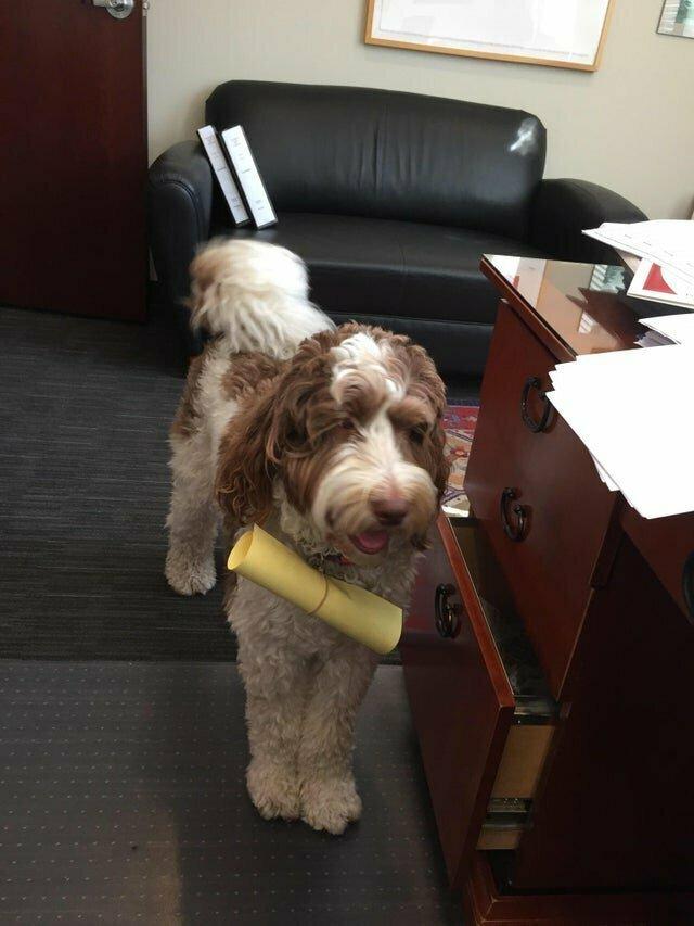 Фрэнни работает в адвокатской конторе, она приносит документы с этажа на этаж