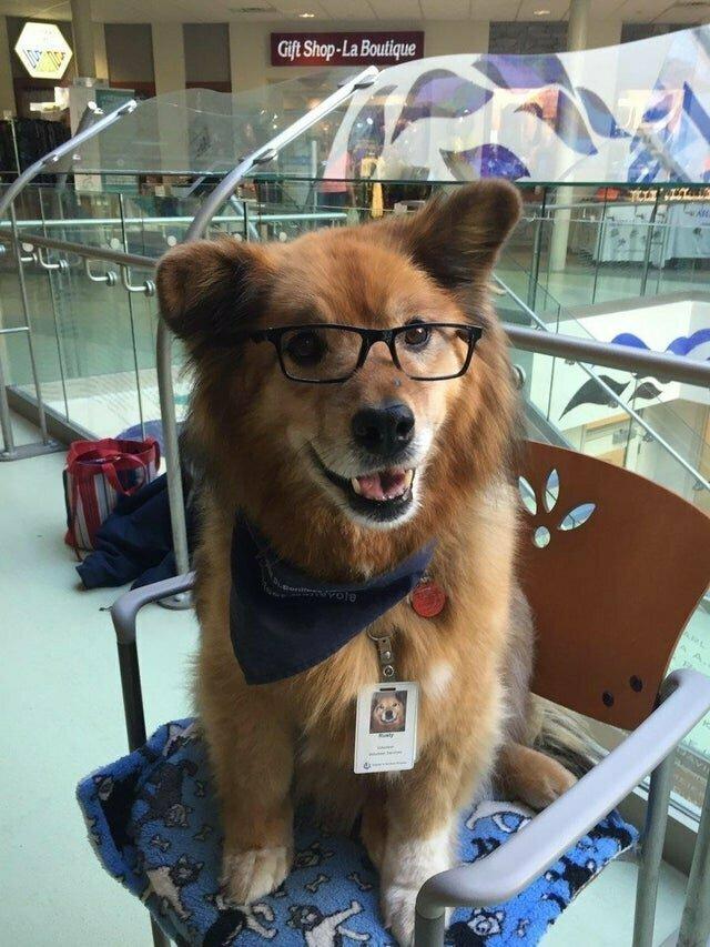 Расти работает в больнице собакой-терапевтом