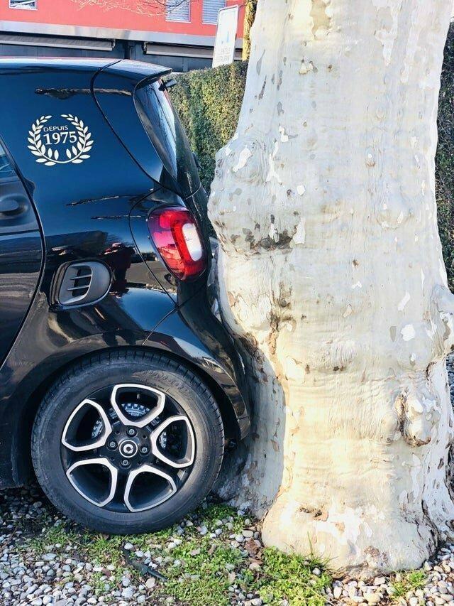 Дерево точно повторяет контур машины