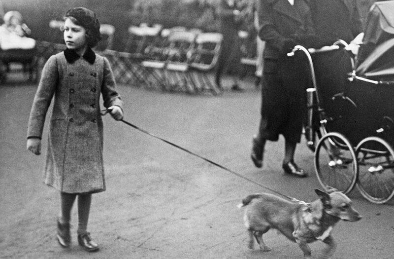 Принцесса Елизавета гуляет с корги в лондонском Гайд-парке.